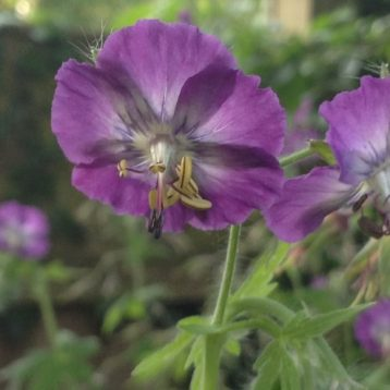 Musings of a Plant Centre Manager: Spring Woodland Beauties