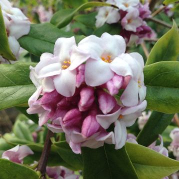 Musings of a Plant Centre Manager: Late Winter Wonders