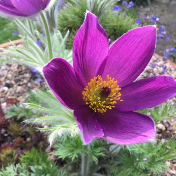 Musings of a Plant Centre Manager: May Flowers