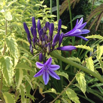 Musings of a Plant Centre Manager: Dry Loving Plants