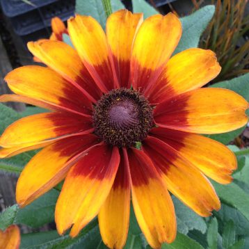 Musings of a Plant Centre Manager: Insect Friendly Plants